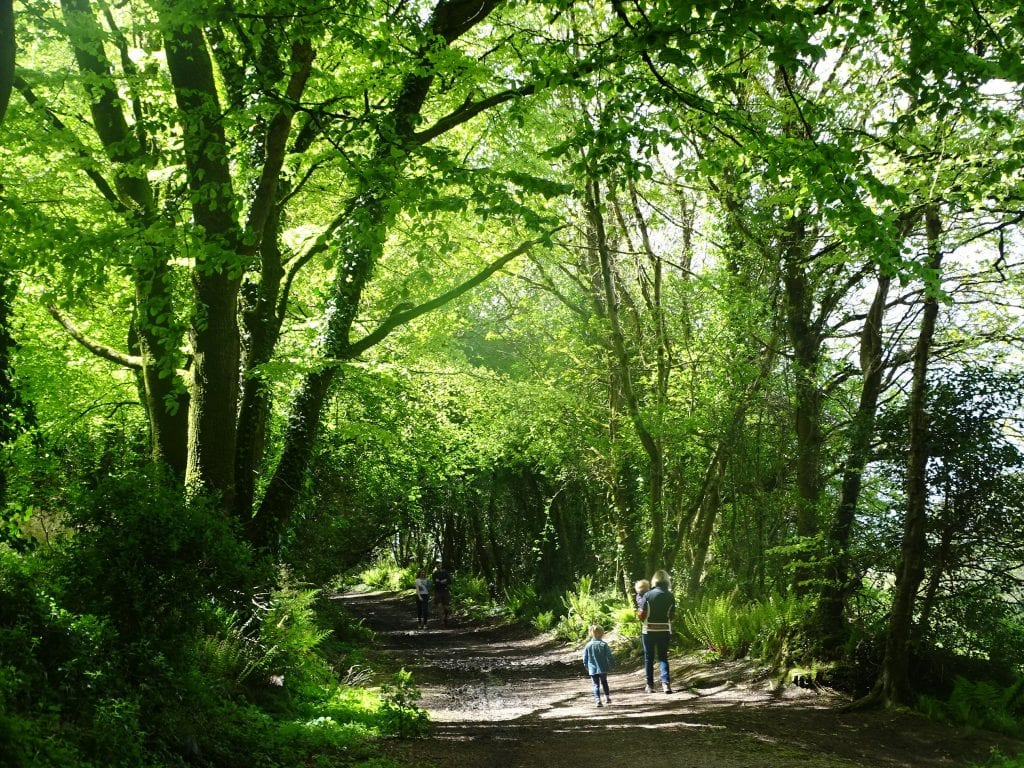 Curraghbinny Woods | www.ringofcork.ie | Ring of Cork