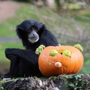 Halloween Fota Wildlife Park | www.ringofcork.ie | Ring of Cork